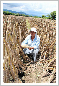 Gilda Zepata with her new crop of maize