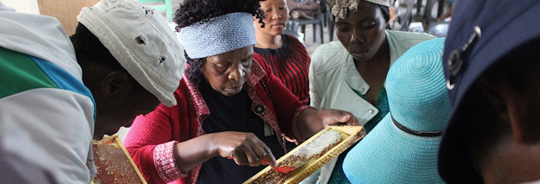 Pupils and beekeepers examine honeycombs in rural Lesotho.