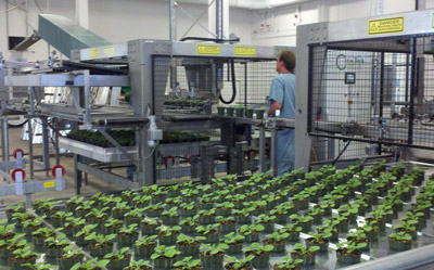 Medicago's new facility uses tobacco plants to helpgrow vaccines