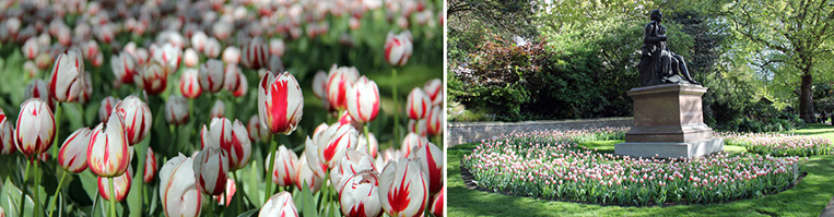 Collage - Les tulips Canada 150